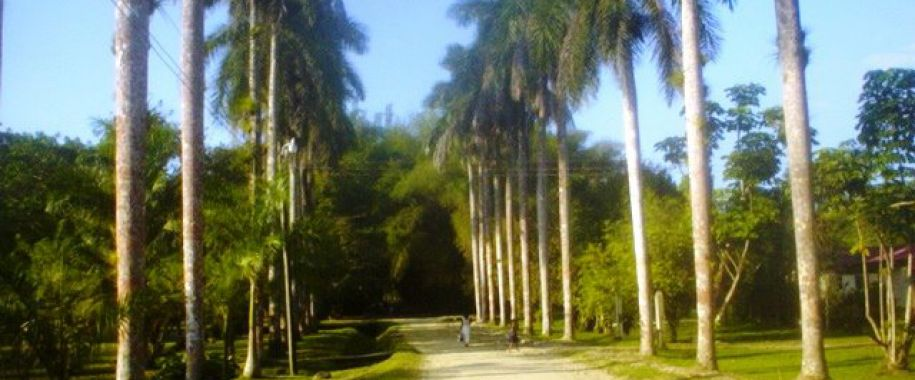 Honduras en sus manos for Sanse 2016 jardin botanico